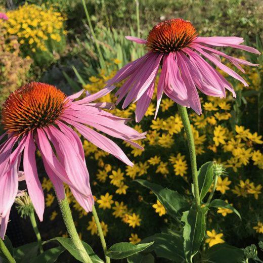 Garten daheim Blumen