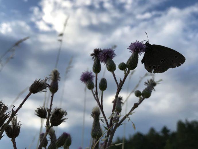 Flugobjekt kleiner Schmetterling