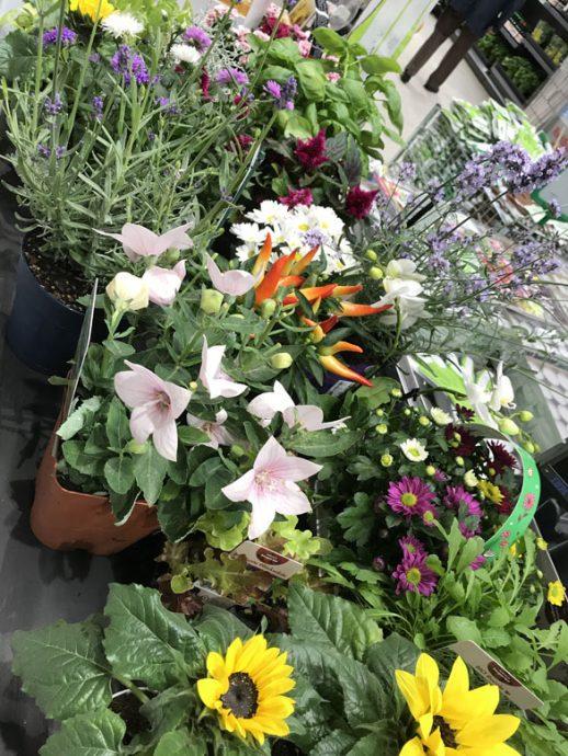 Blumeneinkauf für das Fotoshooting mit Feinrost