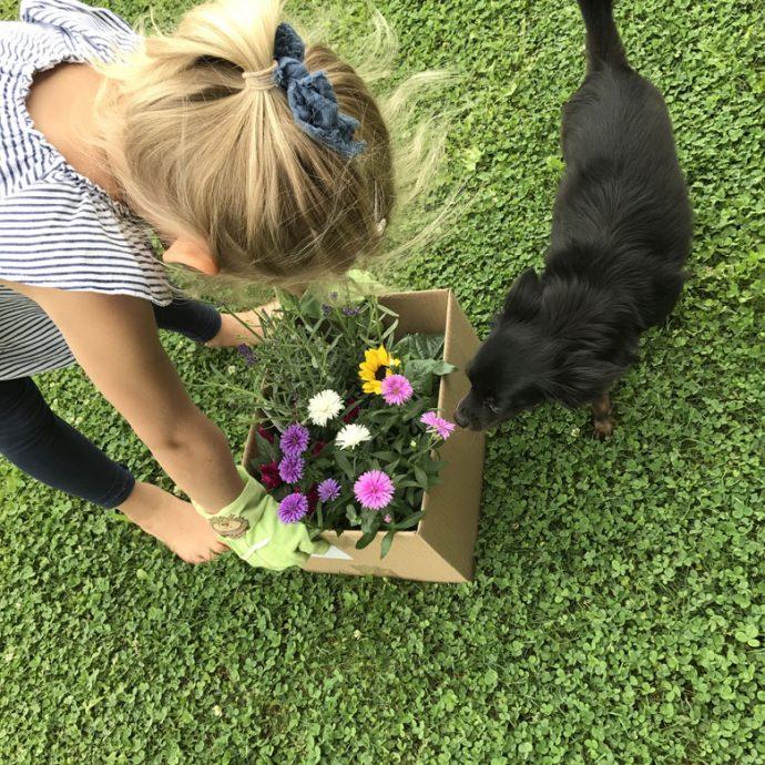 die Blumen werden Arrangiert und dann wird gegartlt - 12 von 12 im August