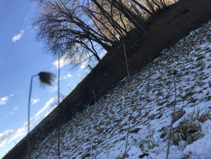 Natur im Januar